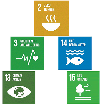 Figure 1: Food-related UN SDGs